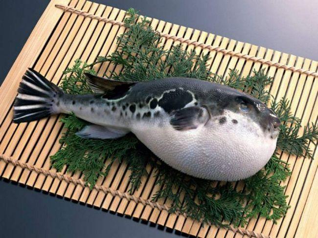 Japanski znam sve tajne kuhanja otrovnice ribe ježa.