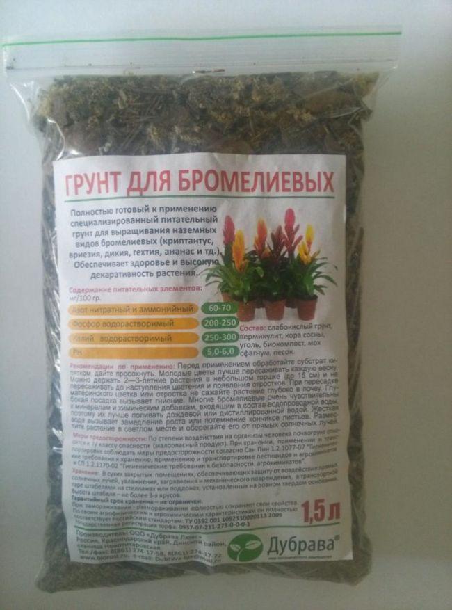 Ground pre bromeliads