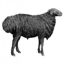edilbaevskie-Ovcy