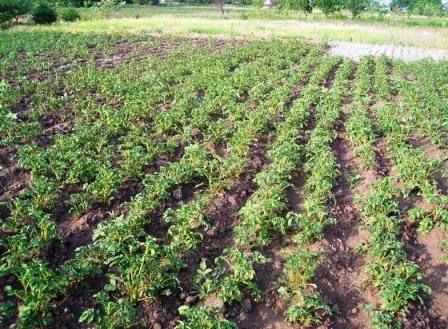 Экологически чистые продукты выращивание