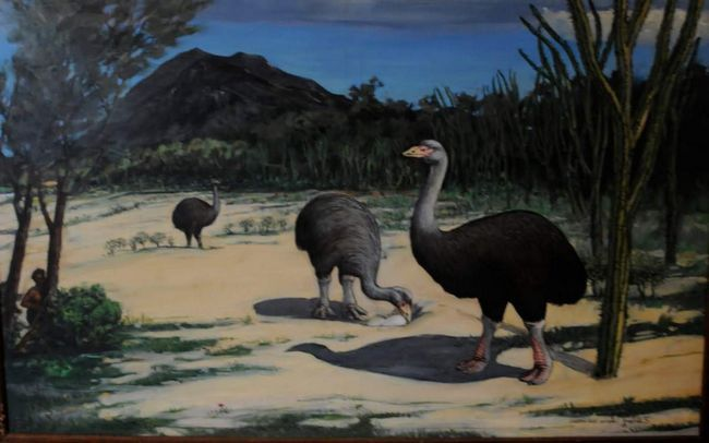 Aepyornis - staré býložravé ptáky přezdívaný