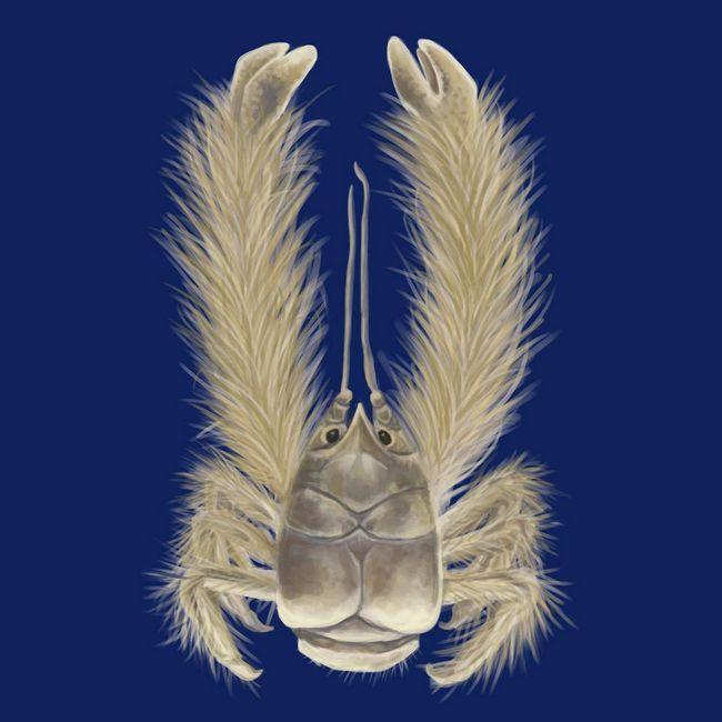 Yeti Crabs - pravi vrtlari. Oni rastu klice i bakterije direktno na tijelo.