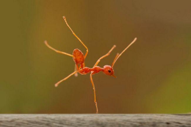 Úžasný svět hmyzu