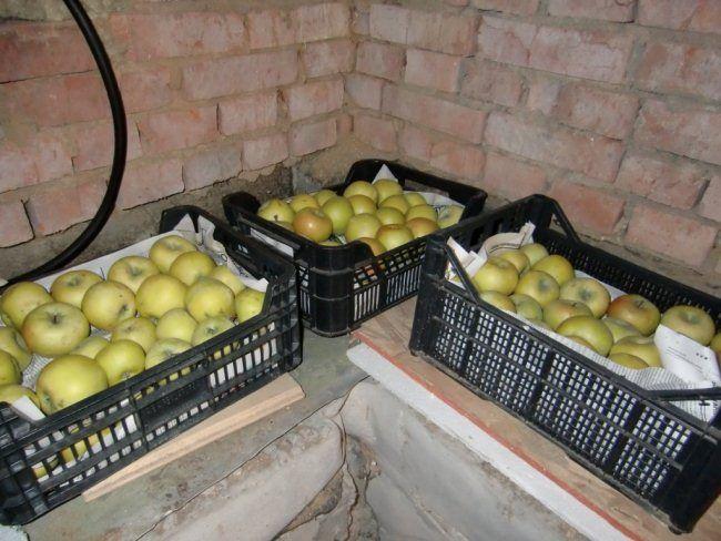 hranenie jablok zimoj