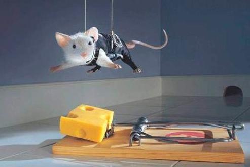 Как избавится от мышей, народными методами