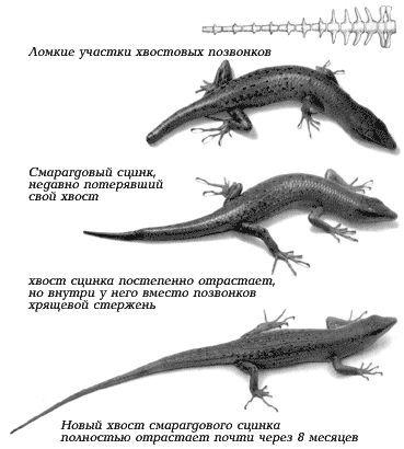 Gušteri na prvi pogled čini se da su primitivni životinje