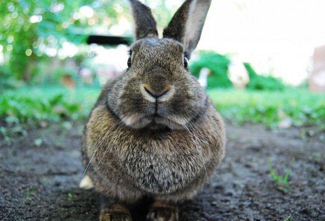 В сибири нашли останки предка кроликов, жившего 14 миллионов лет назад