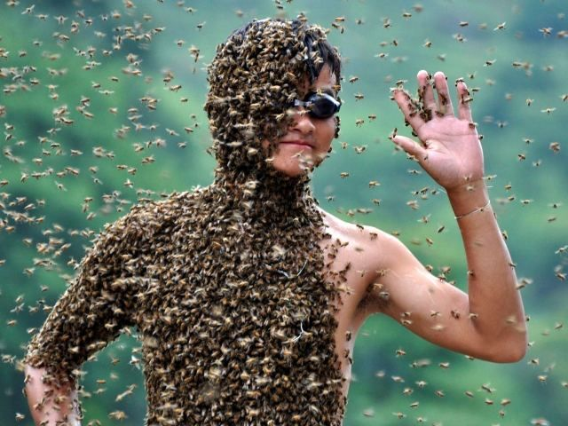 Kineski ostao do 26 kilograma pčela