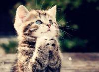 Как наказывать кошку