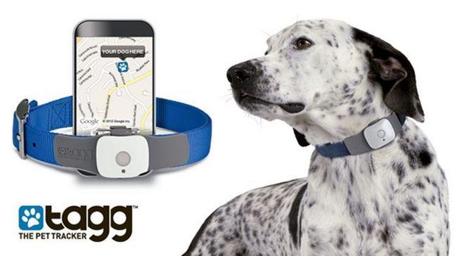 Kao prenosivi elektronski tehnologije mijenjaju živote pasa