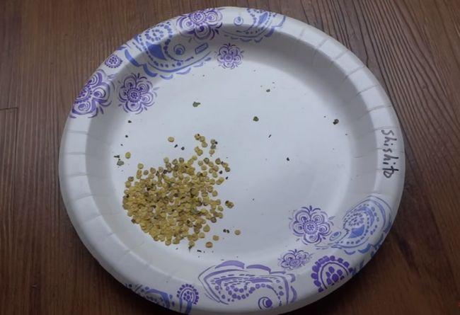 Семена домашнего перца
