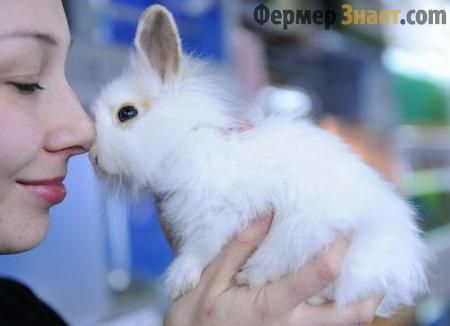 Как правилно да се грижи за домашни зайци