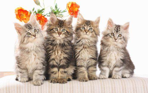 ime za mačke