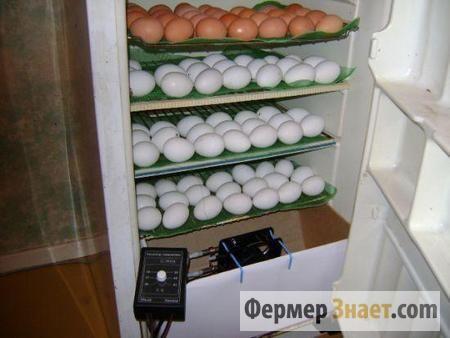 Inkubator hladilnika