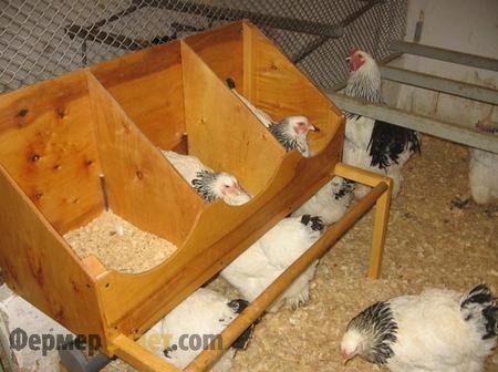 Основные правила содержание кур в небольших хозяйствах