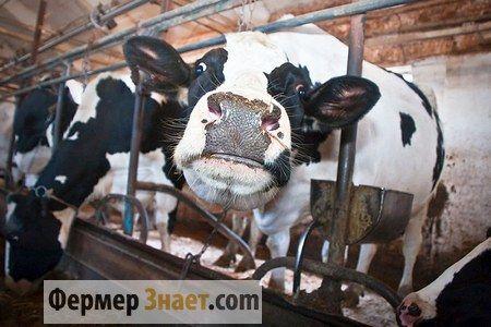 Коровник на 20 коров