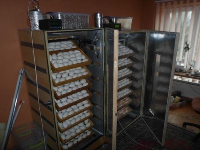 Inkubator svoimi rukami11
