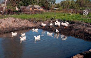 Можно использовать природный водоем, если он недалеко от Вашего дома