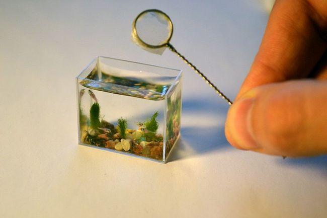 Najmanji na svijetu akvarij s ribom