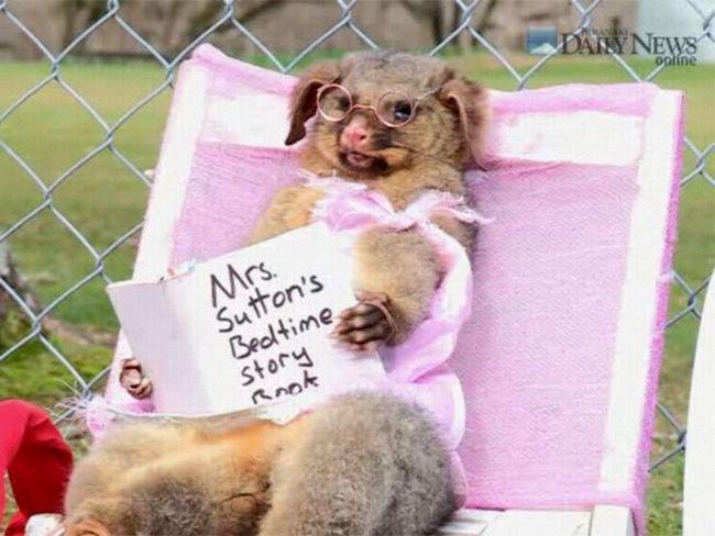 Uzorak nemoralan stav i nepoštovanje za mrtve životinje.