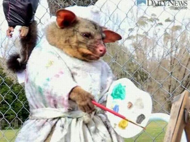 Umjesto da sahranjivanja oposuma, studenti organizovali pravi šou. Osim ruglo prirode, to se ne može nazvati!