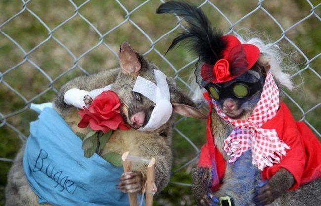 Šeširi i cvijeće, šalovi i perike - da se takvi ukrasi Novi Zeland studenata zaradio $ 6.000 mrtvih životinja.