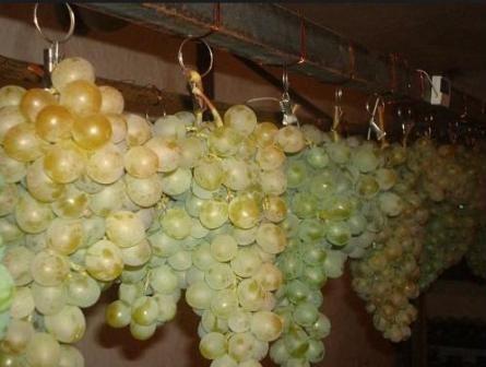 Mi suspenziju grožđe