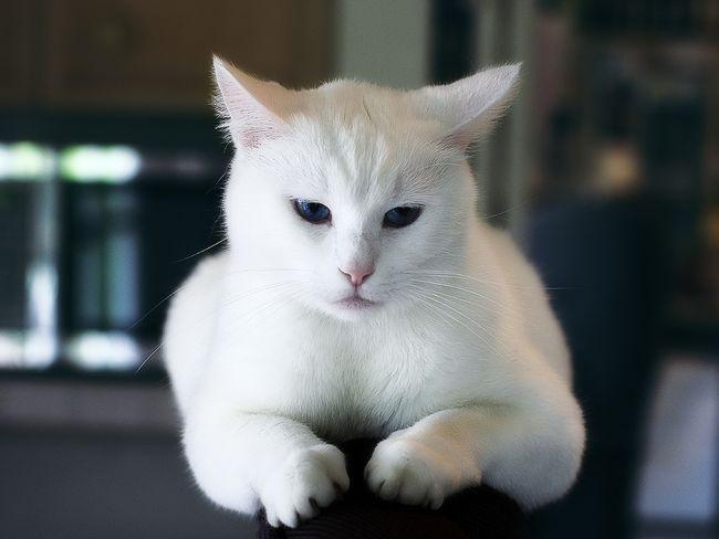 Как узнать есть ли у кошки глисты? Своевременная профилактика здоровья животного