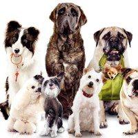 Kako odabrati pasminu pasa