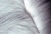 Как вывести блох у кошки, кота