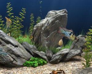 Kako pokrenuti akvarij po prvi put