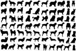 Самые-самые собаки: рекорды собак в книге рекордов гиннесса
