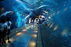 Какие бывают аквариумы?