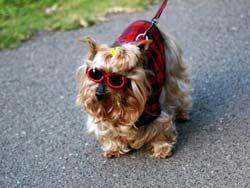 Какие породы собак самые красивые? Какие породы пользуются большими симпатиями у людей?