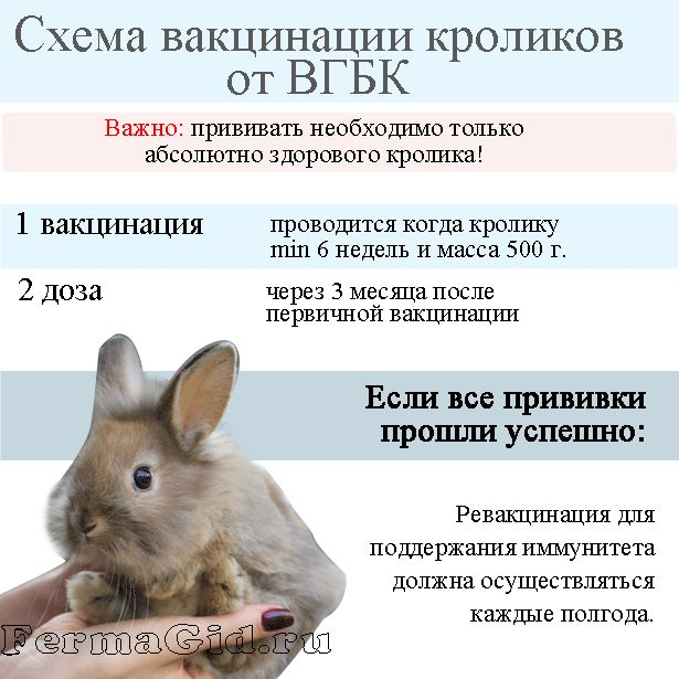 Какие прививки необходимо сделать кроликам и в каком возрасте