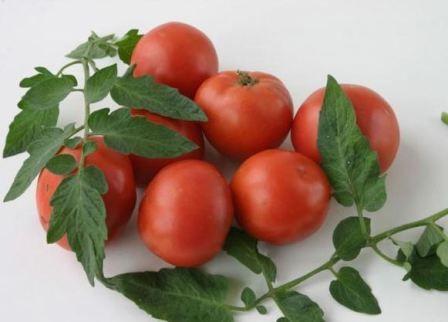 slike paradajz Hrast
