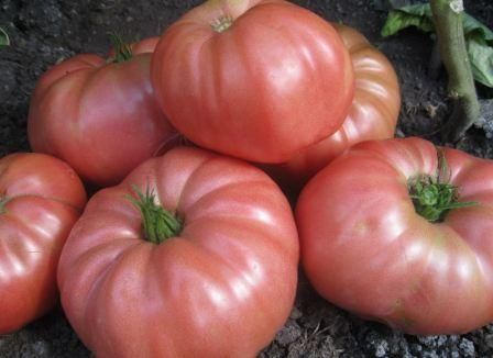 paradajz blitz