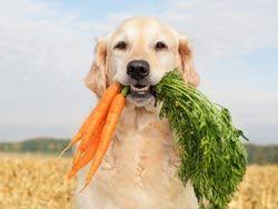 Какие витамины нужны для щенка и взрослой собаки?