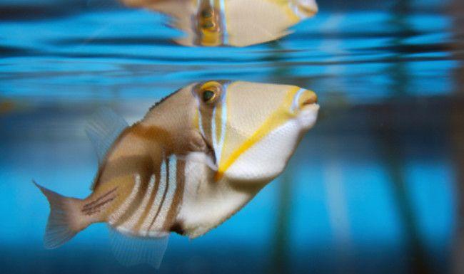Riba ne treba zraka.
