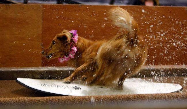 Konkurencija pasa na najdalje skok