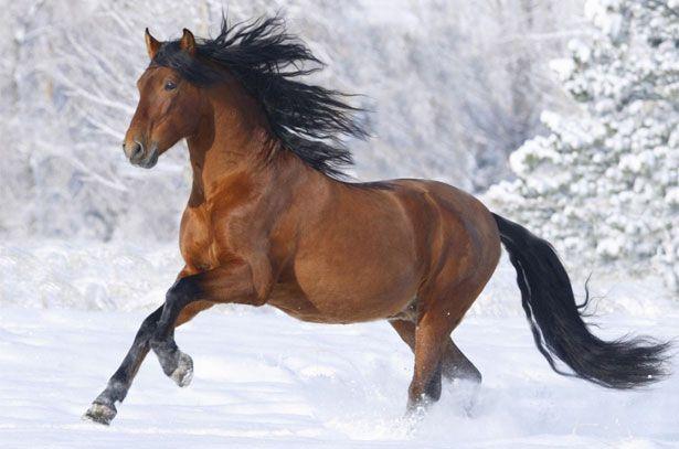 Běh ve sněhu koně