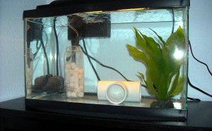Карантин аквариумных рыб