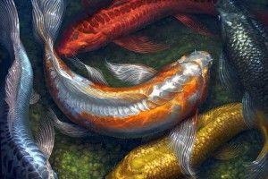 Карп кои: содержание в аквариуме