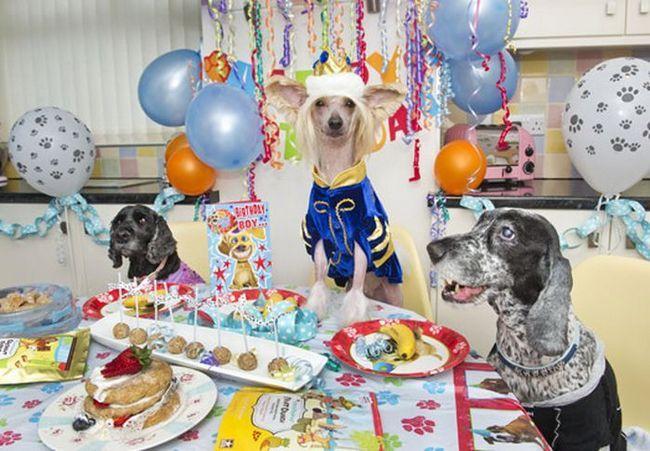 Princ slavi rođendan sa prijateljima