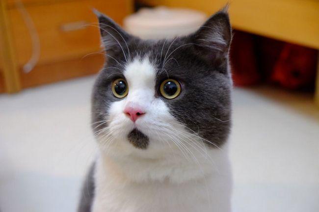 Kineski znamenitovst: iznenađen mačka po imenu Bani
