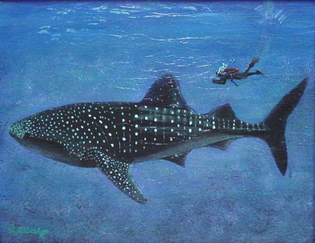 Kit ajkule ne žrtva na velikim životinjama.