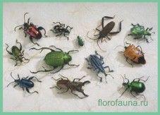 Класснасекомые / insecta