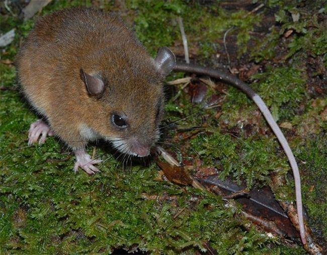 В папуа — новой гвинее обнаружено около 200 новых видов животных и растений