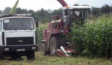Уборка кукурузы на силос, lioznonews.by