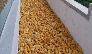 Сушка кукурузы, ic.pics.livejournal.com